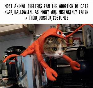 Amazing Animal Facts That Are Almost 100  True