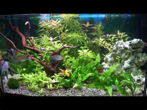 poissons d aquarium zierfische guppy platy betta s doovi