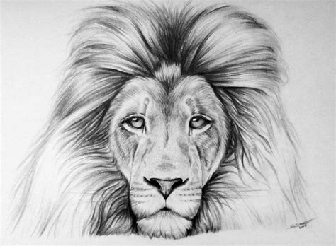 Lion Drawing By Lethalchris On Deviantart