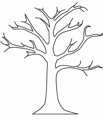 Trunk Tree Drawing Line Outline Clipart Palm