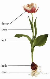 Plant Development And Growth