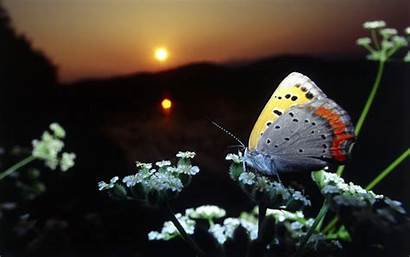 Butterfly Butterflies Scenery Nature Natural Animals Flowers