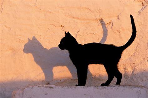 le si鑒e le più foto di gatti focus it