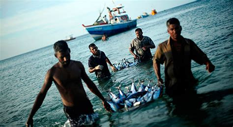asia pacific fishery commission apfic fao regional