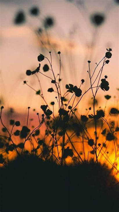 Sunset Flower Dark Nature Shadow Night Iphone