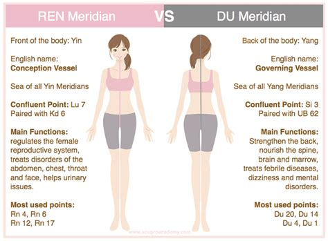 bodys meridian system   governing vessel