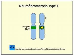 Image Gallery Nf1 Gene