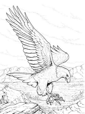 ausmalbild nordamerikanischer weisskopfseeadlerm landet