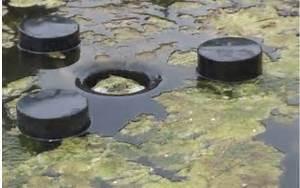 Algen Im Teich Entfernen : entstehung und vermeidung von algen im gartenteich gartenteich planung bau und pflege pflanzen ~ Orissabook.com Haus und Dekorationen
