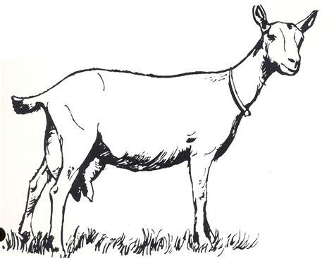 Drawings, Art, Goats