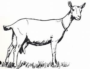 Goat Clip Art #13423 | Soap | Pinterest | Goats, Clip art ...