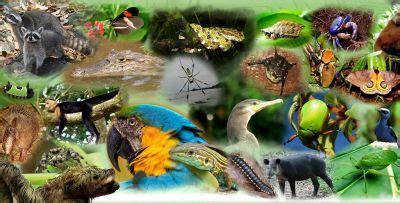 el museo de la biodiversidad de ibi inaugura la exposicion