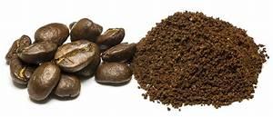 Kaffee Als Dünger : eignet sich kaffeesatz als d nger f r orchideen bio balkongarten blog ~ Yasmunasinghe.com Haus und Dekorationen