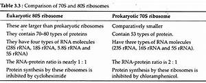 Ribosome  Meaning  Types And Structure