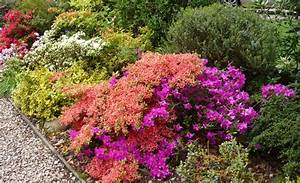 Low Maintenance Shrubs - Garden Design Ideas
