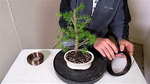 How To Make A Bonsai  Step By Step Beginners Guide To