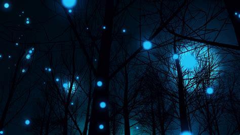 Magic Night Forest  Wwwpixsharkcom  Images Galleries