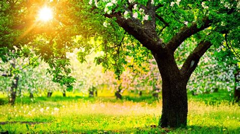 Pavasaris: Kas ir pavasaris, kad tas iestājas un mīti par to.