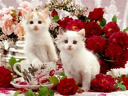 Kittens Cats Wallpapers