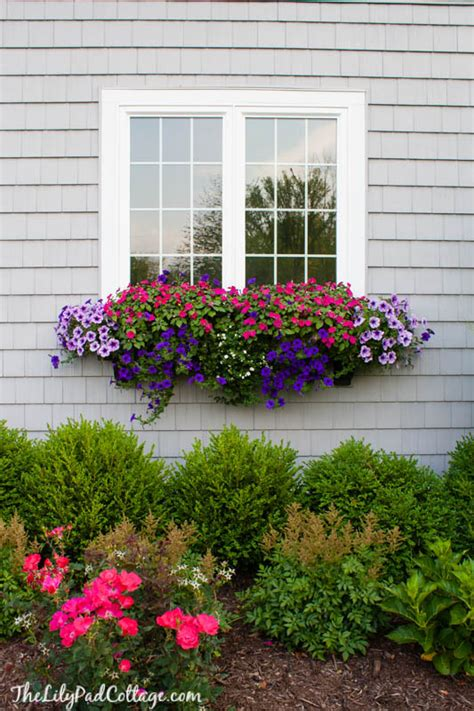 window box tips   black thumb  lilypad cottage