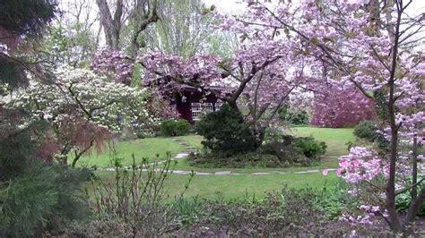 Japanischer Garten Düsseldorf Kirschblüte by 桜祭り Cherry Blossom Japanese Garden Japanischer Garten