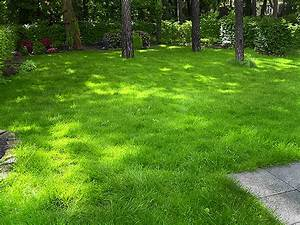 Ab Wann Rasen Vertikutieren : sand auf rasen l chriger rasen auf nassem dichtem boden ~ Lizthompson.info Haus und Dekorationen