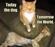 Cat Quote Funny Animals