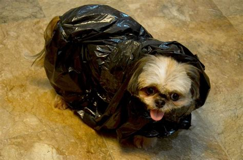 Make A Plastic Bag Poncho For Your Dog Sweet The Ojays And Bags