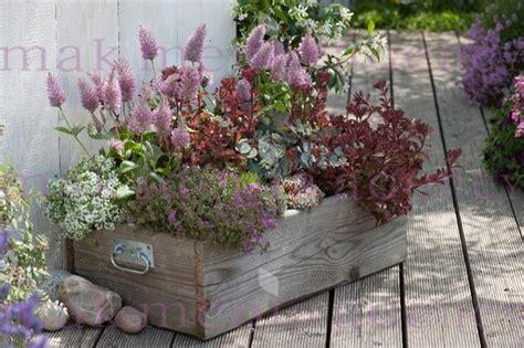 Holzkiste Bepflanzt Als Minigarten  Ptilotus Exaltatus