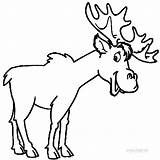 Moose Coloring Pages Printable Elk Funny Outline Clipart Drawing Head Templates Template Cool2bkids Skull Animal Deer Animals Clip Getdrawings Bear sketch template