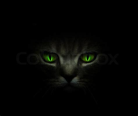 green cats eyes glowing   dark stock photo colourbox