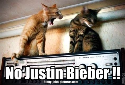 No Justin Bieber Angry Cat