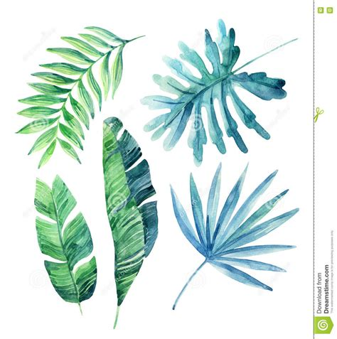Watercolor Tropical Leaves Set Stock Illustration