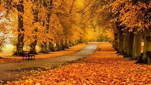 nature, , landscape, , trees, , forest, , fall, , branch, , bench, , path, , park, wallpapers, hd, , , , desktop, and
