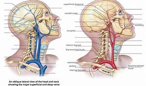 Wiring And Diagram  Diagram Of Veins In Your Neck