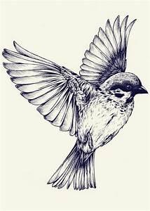 Black White Bird in Flight   Bleh   Pinterest   Birds in ...
