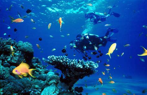scuba diving sites  dubai uae travel tips