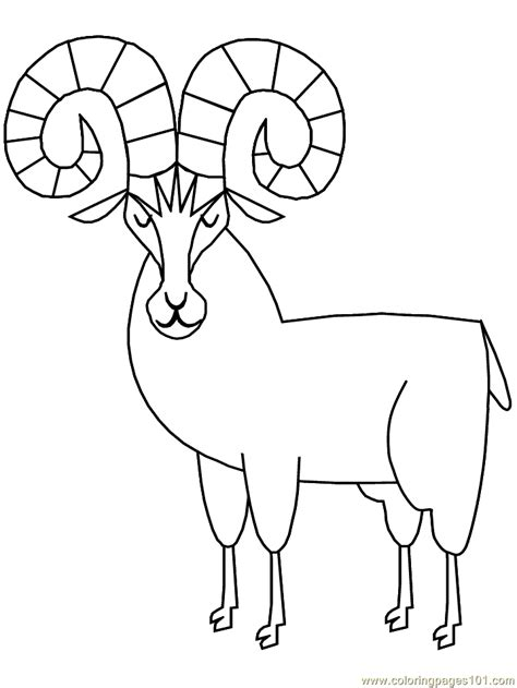 bighorn ram coloring page  ram coloring pages coloringpagescom