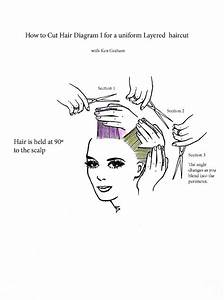 54 Best Images About Hair Cutting Diagrams On Pinterest