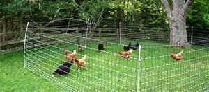 Grillage A Mouton Pas Cher : enclos poules hauteur grillage ~ Dailycaller-alerts.com Idées de Décoration
