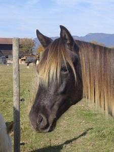 Combien De Chevaux : combien de chevaux avezvous 1 forum cheval ~ Medecine-chirurgie-esthetiques.com Avis de Voitures