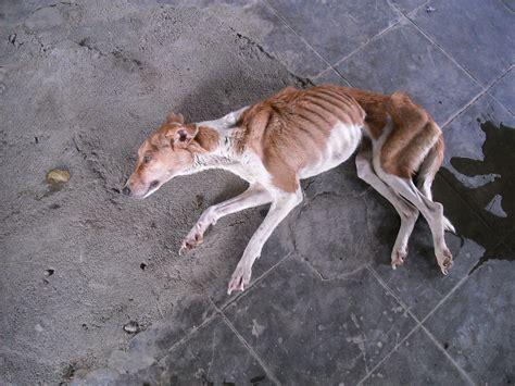 Dog Pound Animals