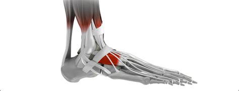 foot pain foot injuries sportsinjuryclinicnet