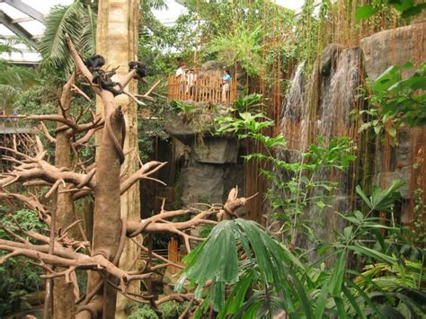 omaha zoo nebraska indoor things henry ne doorly rainforest largest through plants birds jungle aquarium lied walk trees worlds waterfalls