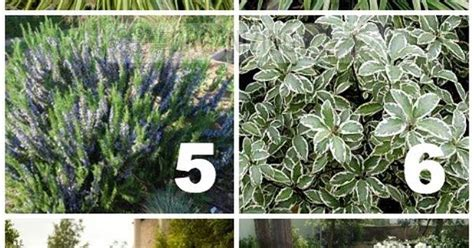 zone 10 plants list list of plants used in california drought tolerant yard