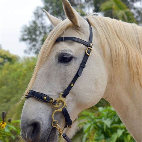 hackamore baroque horse bridle tack draft riding horses bitless bit western medieval english pony leather dressage equipment trail gear saddle