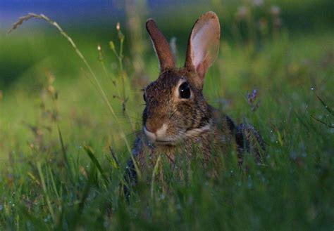 patte de lapin porte bonheur patte de lapin porte bonheur 28 images vendredi 13 les porte bonheur le point porte bonheur