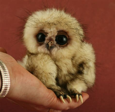 baby owls give us food gifs