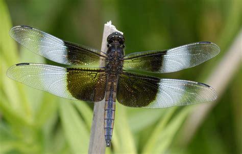 california   york nature  wildlife photography