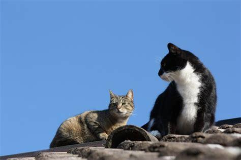 marder und katzen verhalten